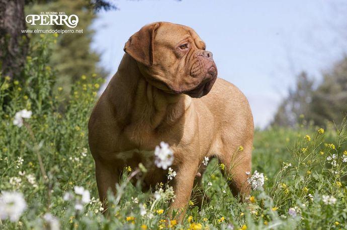 Golpe de calor en perros