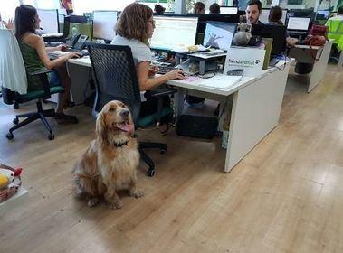 Un perro en las oficinas centrales de Tiendanimal.
