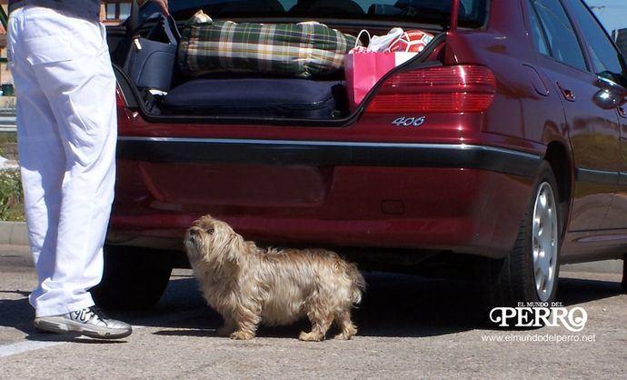 Recomendaciones del Colegio de Veterinarios de Valencia para viajar con nuestras mascotas