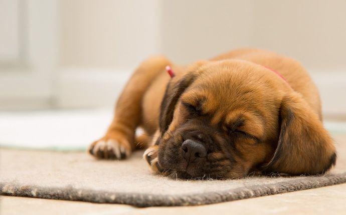 Mi perro respira muy rápido cuando duerme ¿Qué le pasa?