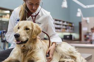 Zoetis apoya la labor de AVEM encaminada a velar por la calidad de vida de los ciudadanos y de sus mascotas