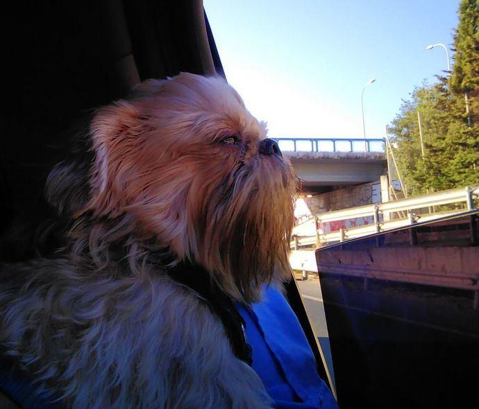 Verano, viajes por el mundo y perros