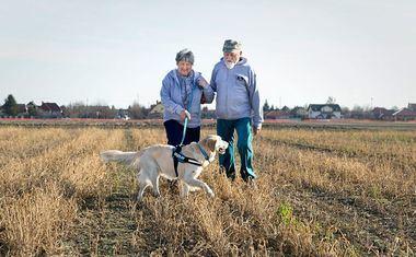 Los innovadores trabajan por un paseo de perros sin dolor