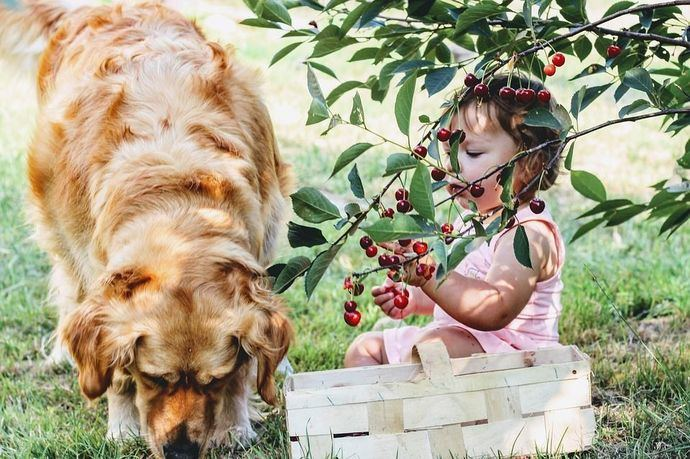 10 razones para dar comida natural a tu perro en lugar de piensos