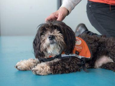 Tres historias de perros abandonados que, al recibir una segunda oportunidad, han encontrado el amor de una familia y ahora ayudan a otras personas.