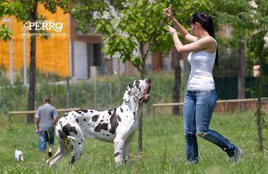 Aprender de nuestro perro