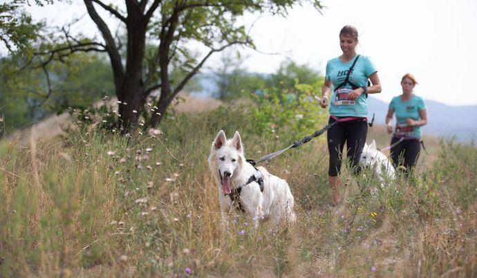 Una dura carrera de perros