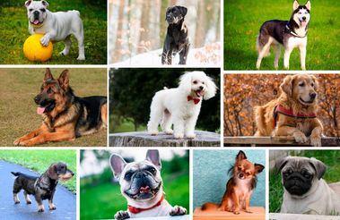 ¿Cuáles son las razas de perro más populares en Instagram?