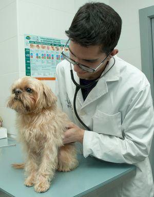 Problemas estomacales en perros