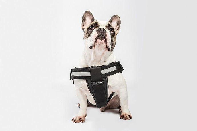 ¿Qué tipo de arnés corresponde al cuerpo de cada perro?