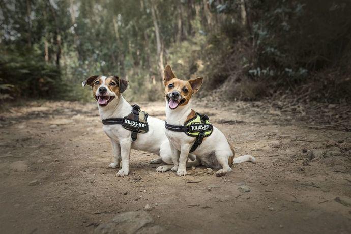 Cómo elegir un arnés para perros de alta calidad y como usarlo de manera correcta