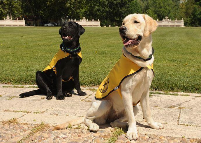 Perros en formación