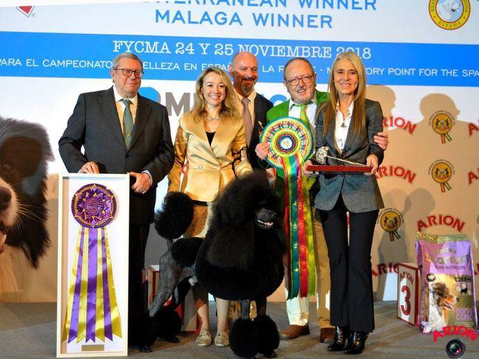 'Marte', un Caniche Gigante, se Lleva la victoria del Best In Show