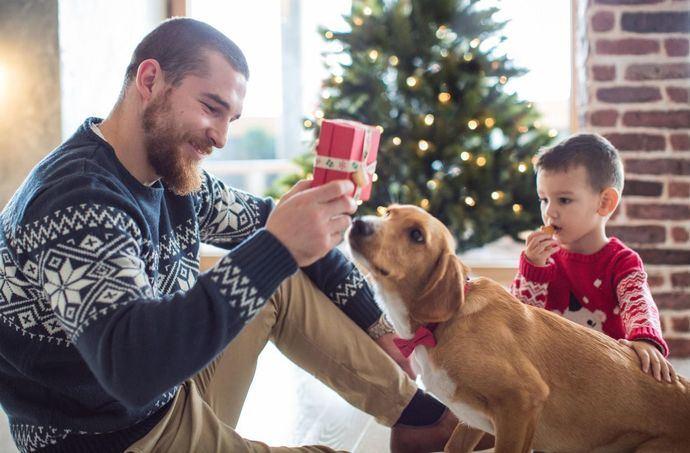 1 de cada 10 familias españolas prevé regalar un animal de compañía por Navidad según Fundación Affinity