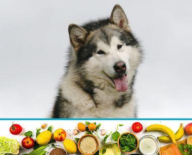 ¿Influye la alimentación en la salud de nuestro perro?