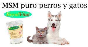 Protege a tu perro o gato contra dolores crónicos e inflamaciones con el CONDROPROTECTOR natural MSM