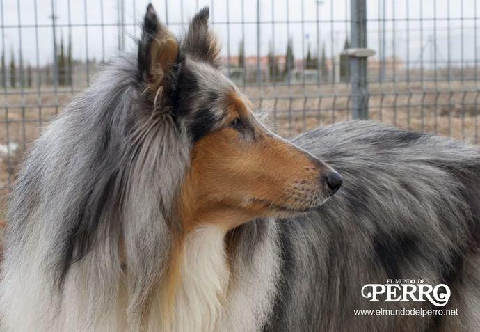 Foto: El Mundo del Perro.