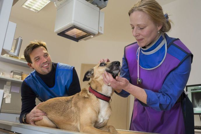 Principales enfermedades infecciosas en el perro