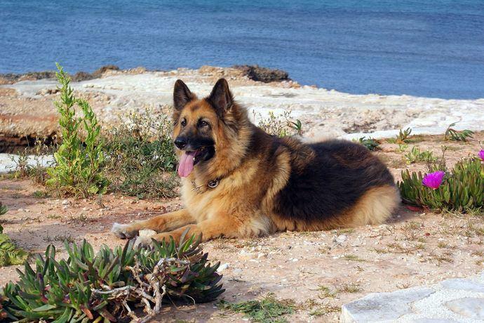 Cambia la vida de tu perro con LaraVital
