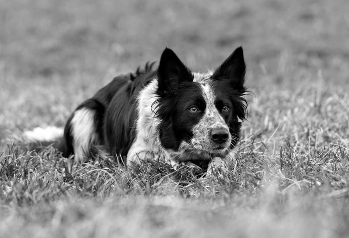 Un 42% de los dueños de perros y gatos considera que sus mascotas prefieren una alimentación omnívora