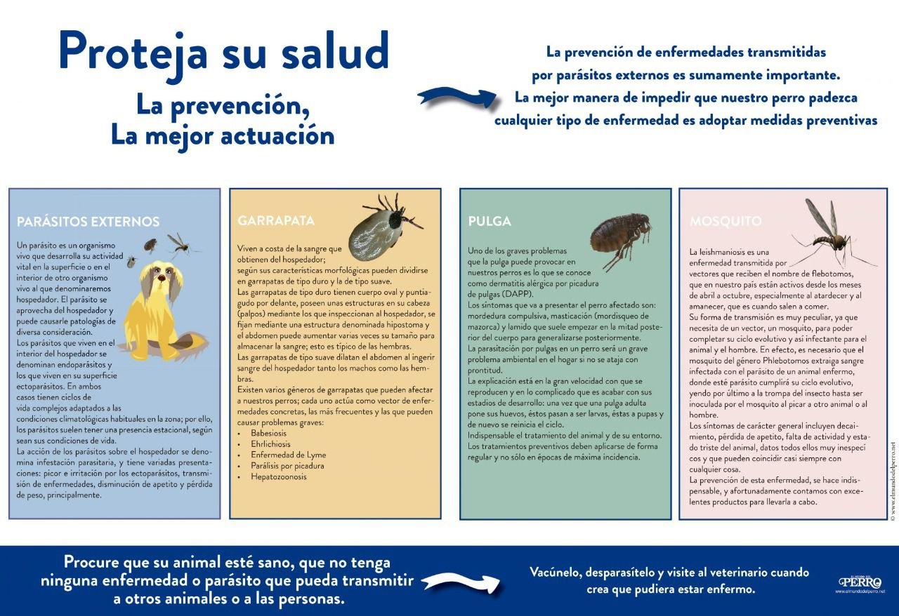 parásitos negros en salmón