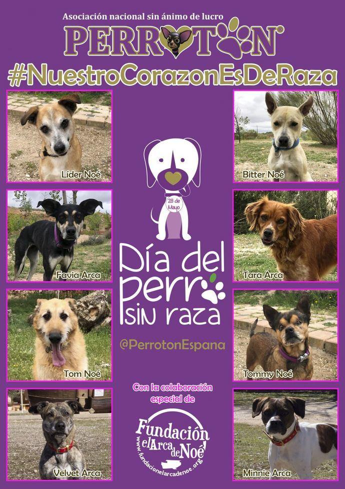 Día del perro sin raza. 28 de Mayo
