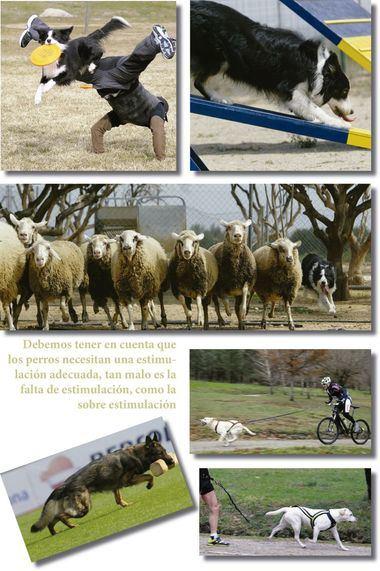 Fotos: El Mundo del Perro - Alberto Nevado.