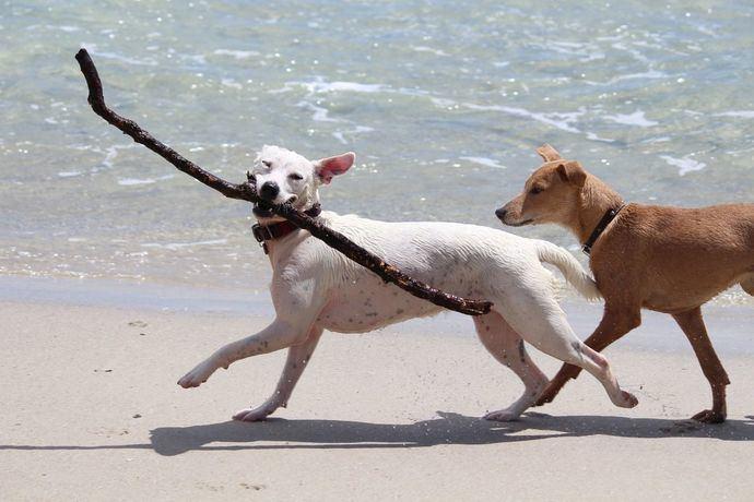 El ICOVV informa sobre los consejos más útiles para proteger a nuestros perros este verano