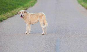 Más de 138.000 perros y gatos fueron recogidos por refugios y protectoras en España en 2018