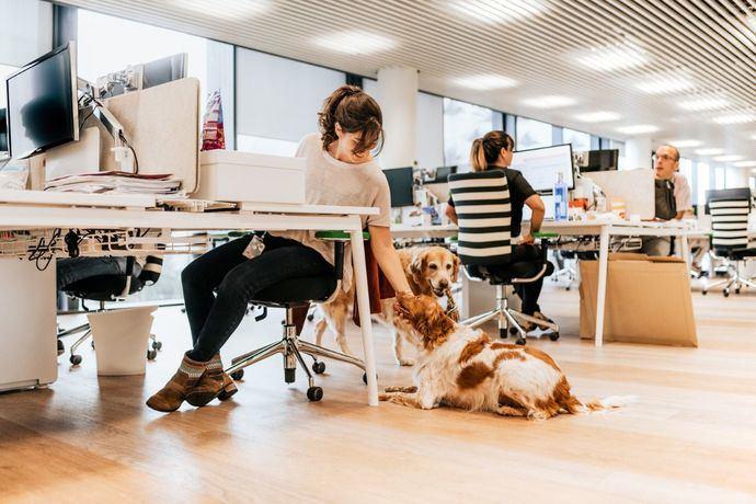 Los perros pueden ser los mejores aliados para reducir el estrés en el trabajo