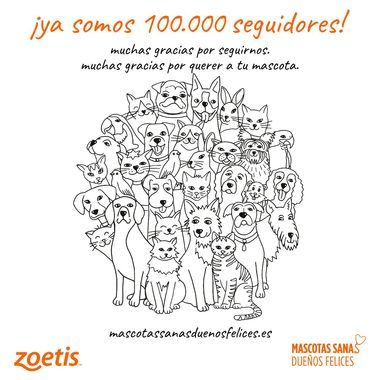 """Más de 100.000 amantes de los perros y gatos siguen a """"Mascotas sanas, dueños felices"""""""