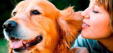 Adopción, educación y cuidado de los perros