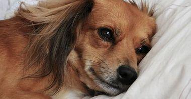 ¿Consentir o no? ¿Dejáis al perro entrar en vuestra cama?
