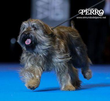 Foto: El Mundo del Perro - Alberto Nevado.