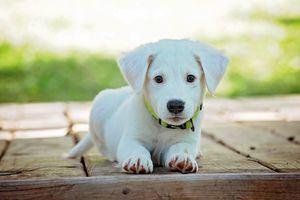 Descubre las nuevas tendencias en la comida para perro