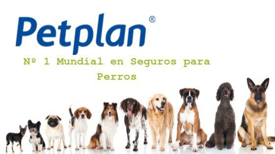 Petplan, no habrá otro seguro de salud que te ofrezca mejores coberturas para tu perro, por algo son el número 1 mundial