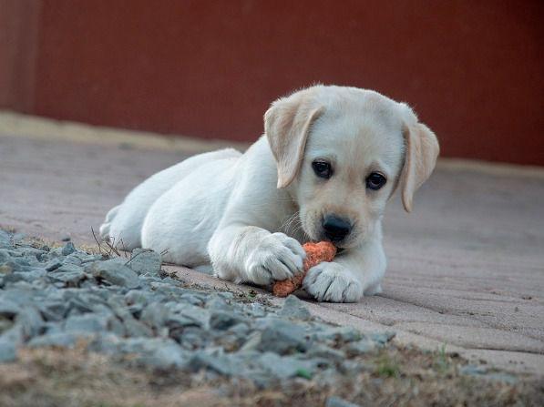 Un comparador de piensos te ayudará a elegir la alimentación correcta para tus mascotas