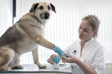 3 de cada 10 radiografías en veterinaria no se interpretan adecuadamente