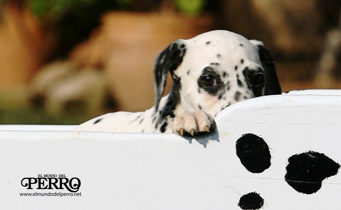 Foto: Alberto Nevado - El Mundo del Perro.