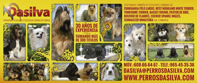 Chihuahua pelo largo, West Highland White Terrier, Yorkshire Terrier, Basset Hound, Pastor de Brie, Bouvier de Flandes, Cocker Spaniel Inglés...