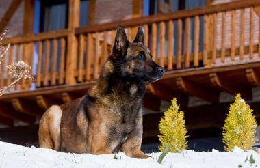 Foto: Alberto Nevado -El Mundo del Perro.