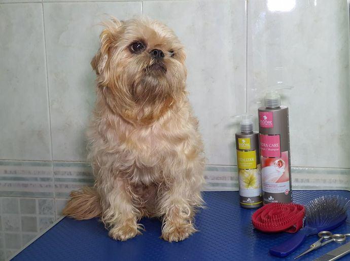 Si tu perro se rasca o mordisquea insistentemente revisa su piel. Piel seca, principal causa de problemas de piel