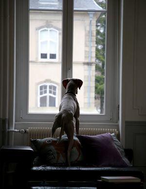 Regular la dieta, mantener los hábitos y seguir visitando al veterinario, claves para un confinamiento saludable con animales de compañía