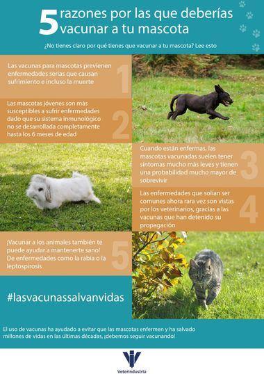 """Veterindustria apoya la """"Semana Europea de la Inmunización"""" y el """"Día Mundial de la Vacunación en Animales"""""""