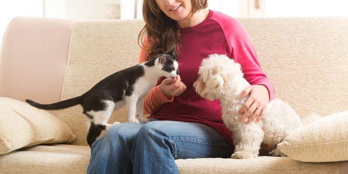 El 74% de los españoles que conviven con un perro o un gato pasa mejor el confinamiento, según Fundación Affinity