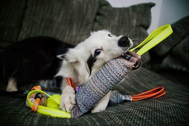 ¿Cómo cansar a tu perro durante la cuarentena? ¡Consejos útiles de JULIUS-K9®!