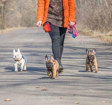 La a RSCE recomienda aumentar los paseos de los perros 15 minutos en cada fase de la desescalada