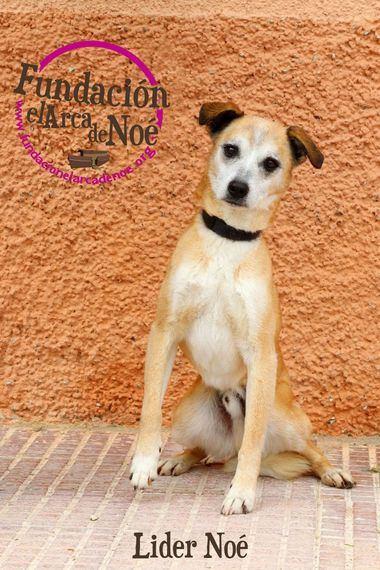 Perroton beca por primera vez en España la adopción responsable de un perro abandonado