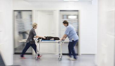 ¿Qué requisitos debe cumplir mi mascota para ser donante de sangre?
