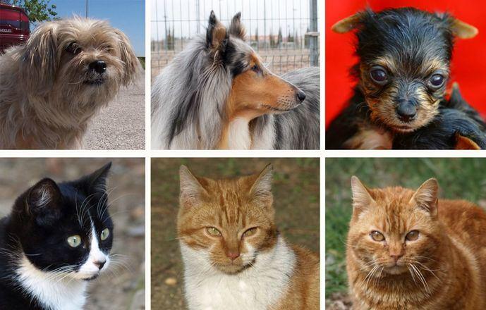 Fotos El Mundo del Perro y El Mundo del Gato